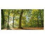 Motion pour une vraie ambition politique de l'Etat pour les forêts française et l'ONF